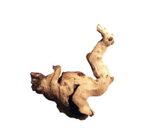 Африканское дерево Мопани 5-10 см