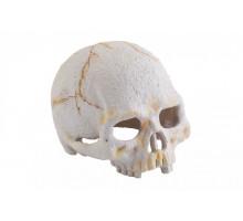 Укрытие для рептилий Exo Terra череп примата S